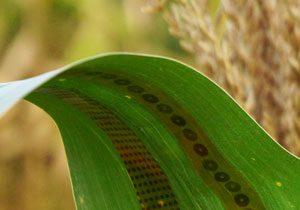سنسورهای گیاهی